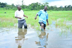 Rice farmers partner ministry of water resources, to access 116 water facilities nationwide