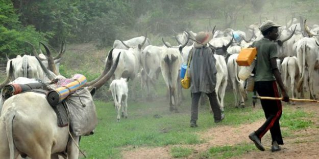 Shocking! Fulani Herdsmen Remove Woman's Finger, Shatter Her Jaw With Bullets In Ogun