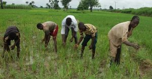 FOOD security: Nigerian farmers cultivated 221,450 hectares of land in 2020
