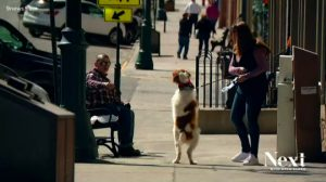 Meet The Dog That Walks On Two Legs Just Like A Human (Video)