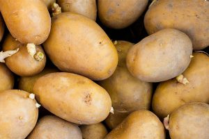 Potato support project empowers 220 farmers in Plateau